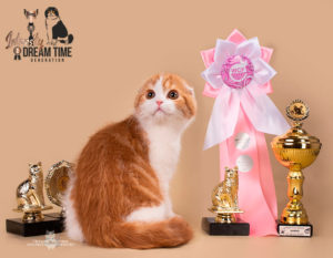 WCF, титулы кошек, чемпион мира WCF, красный мраморный биколор